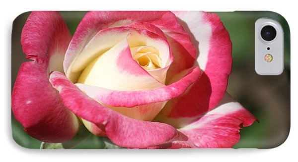 Double Delight Rose IPhone Case