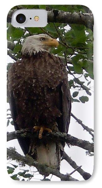 Eagle At Hog Bay Maine IPhone Case