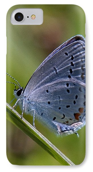 Eastern Tailed-blue Butterfly Din045 IPhone Case