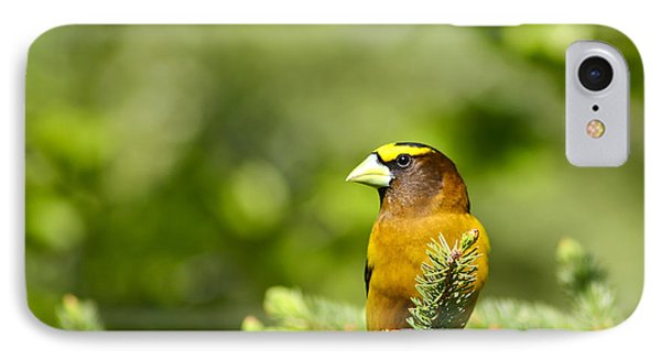 Evening Grosbeak IPhone Case