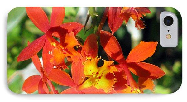 Florida Wild Iris IPhone Case