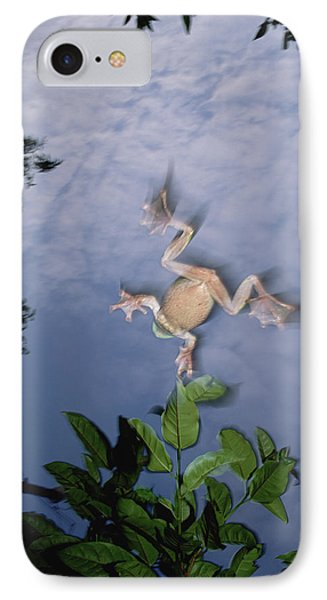 Foam Nest Tree Frog Polypedates Dennysi IPhone Case