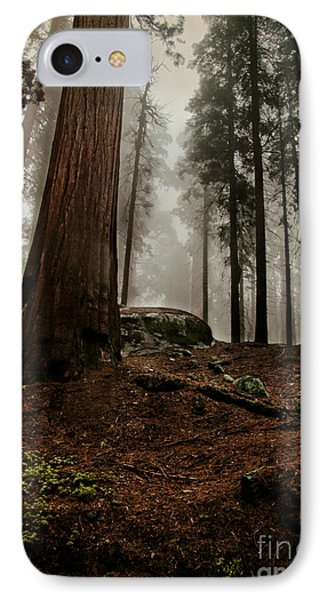 Forest Floor And Fog IPhone Case