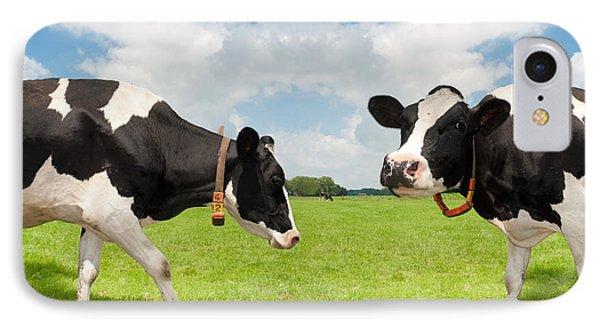 Frisian Cows IPhone Case
