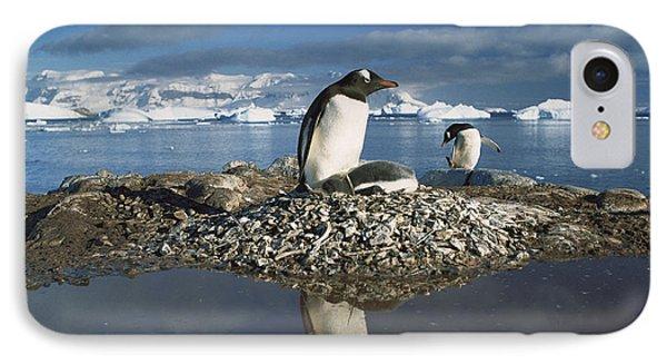 Gentoo Penguin Pygoscelis Papua Parent IPhone Case