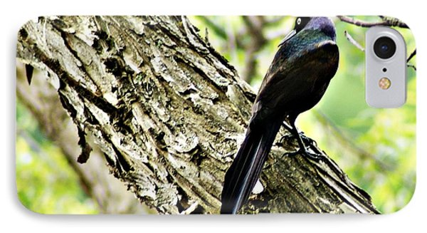 Grackle 1 IPhone Case