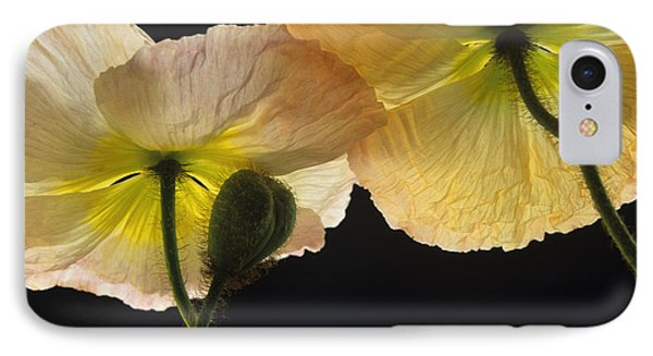 Iceland Poppies 2 IPhone Case