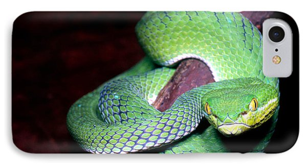 Island Pit Viper IPhone Case