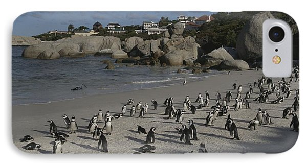 Republic Of South Africa iPhone 8 Case - Jackass Penguins Strut For Tourists by Stacy Gold