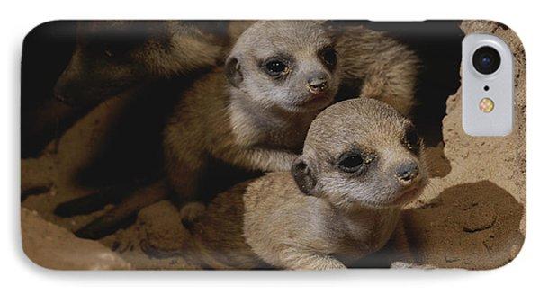 Republic Of South Africa iPhone 8 Case - Just Waking Up, Two Meerkat Pups by Mattias Klum