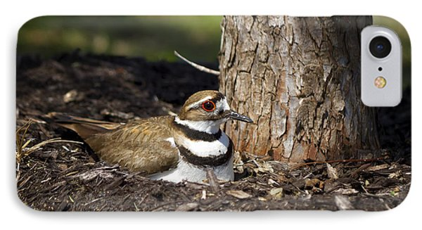 Killdeer IPhone Case