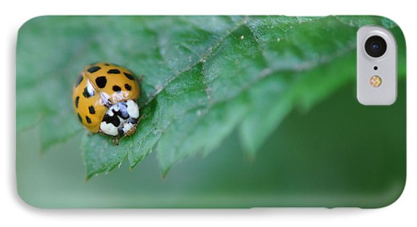 Ladybug Posing On Astilbe Leaf IPhone Case