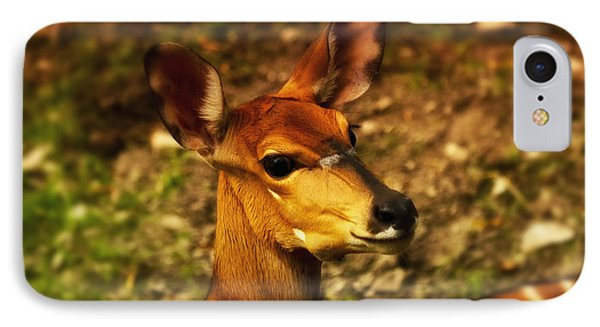 Lesser Kudu IPhone Case