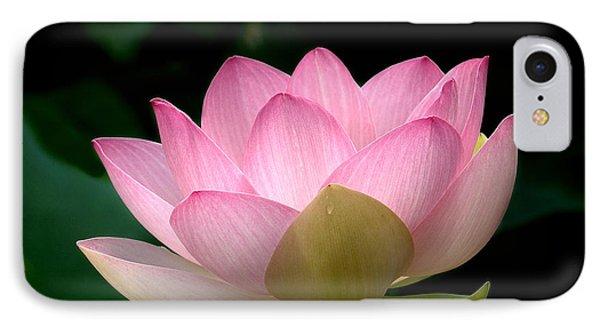 Lotus Beauty--blushing Dl003 IPhone Case