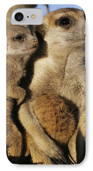 Republic Of South Africa iPhone 8 Case - Meerkat Pups With Their Caretaker by Mattias Klum