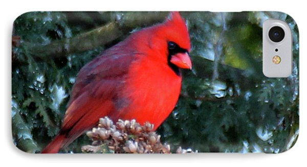 Northern Cardinal Male IPhone Case