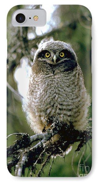 Northern Hawk Owl Fledgeling IPhone Case