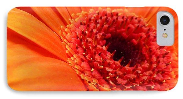 Orange Gerbera Close Up IPhone Case