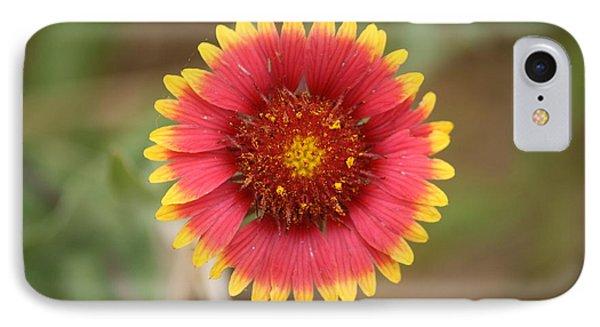 Painted Blanket Flower IPhone Case