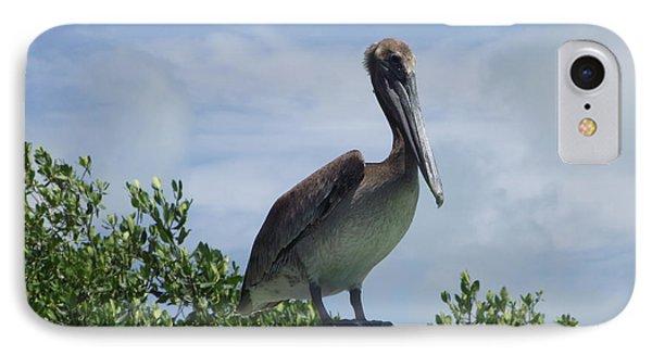 Perched Pelican IPhone Case