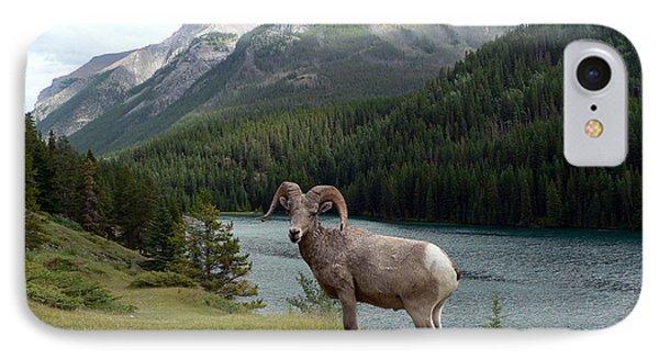 Portrait Of A Bighorn Sheep At Lake Minnewanka  IPhone Case