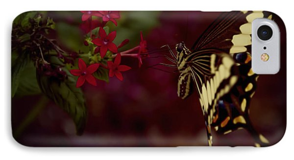 Radiant Swallowtail IPhone Case