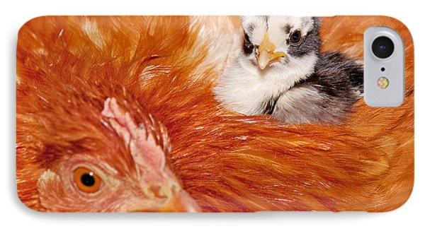 Safety Of Mama Hen IPhone Case