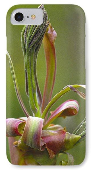 Shagbark Hickory Leaf And Flower Bud IPhone Case