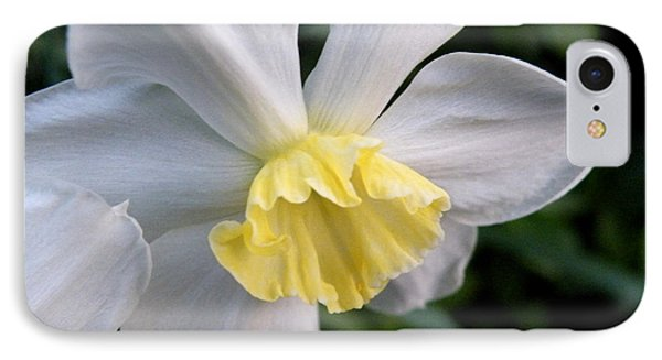 Shy Daffodil IPhone Case