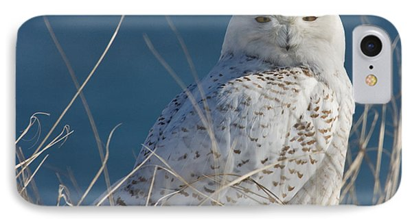 Snowy Owl Profile IPhone Case