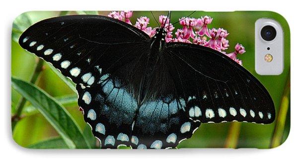Spicebush Swallowtail Din038 IPhone Case