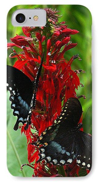 Spicebush Swallowtails Visiting Cardinal Lobelia Din041 IPhone Case