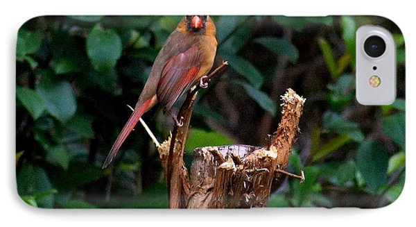 Spring Cardinal IPhone Case