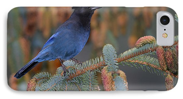 Stellar Jay, Haines, Alaska IPhone Case
