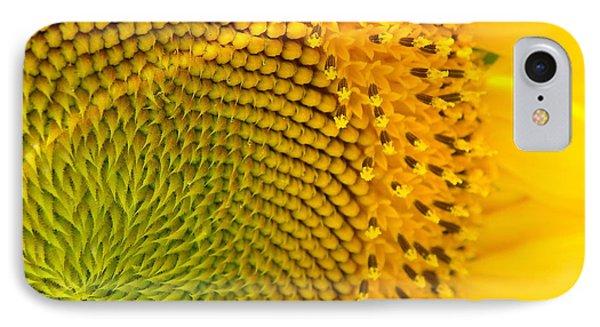 Sunflower Study 1 IPhone Case