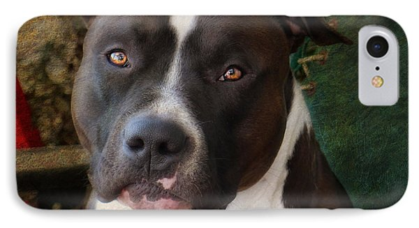 Bull iPhone 8 Case - Sweet Little Pitty by Larry Marshall