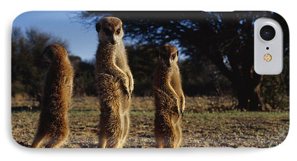 Republic Of South Africa iPhone 8 Case - Three Meerkats With Paws Poised Neatly by Mattias Klum