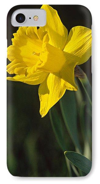 Trumpeting Daffodil IPhone Case