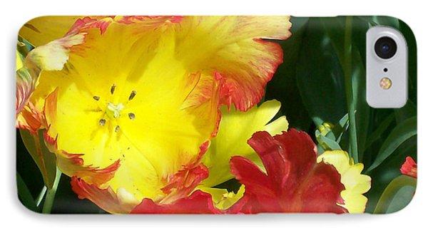 Tulips 1 IPhone Case