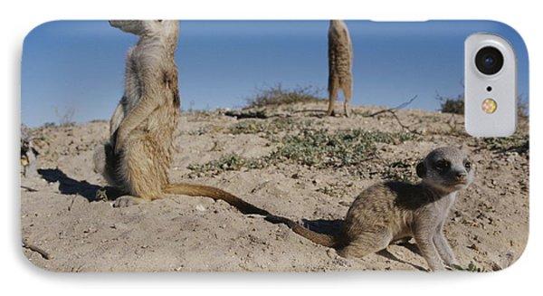 Republic Of South Africa iPhone 8 Case - Two Adult Meerkats Suricata Suricatta by Mattias Klum