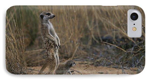 Republic Of South Africa iPhone 8 Case - Using Its Tail, An Adult Meerkat by Mattias Klum