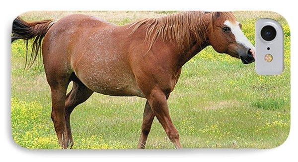 Walking Horse IPhone Case