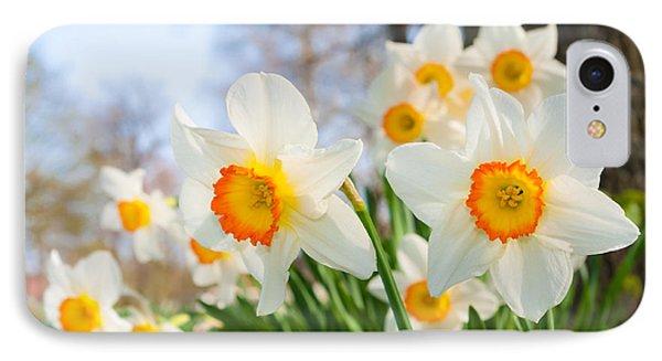 White Daffodils IPhone Case