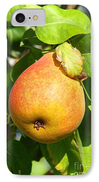 Winter Pear 1 IPhone Case