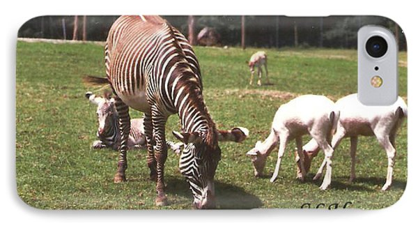 Zebra's Grazing IPhone Case