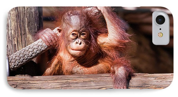 Baby Orangutan IPhone Case