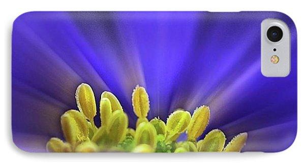 blue Shades - An Anemone Blanda IPhone Case