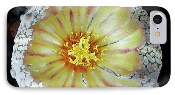 Cactus Flower 2 IPhone Case