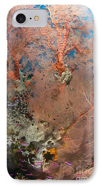 Colourful Sea Fan With Crinoid, Papua IPhone Case