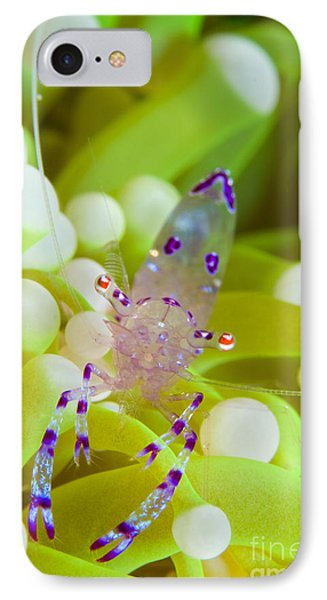 Commensal Shrimp On Green Anemone IPhone Case